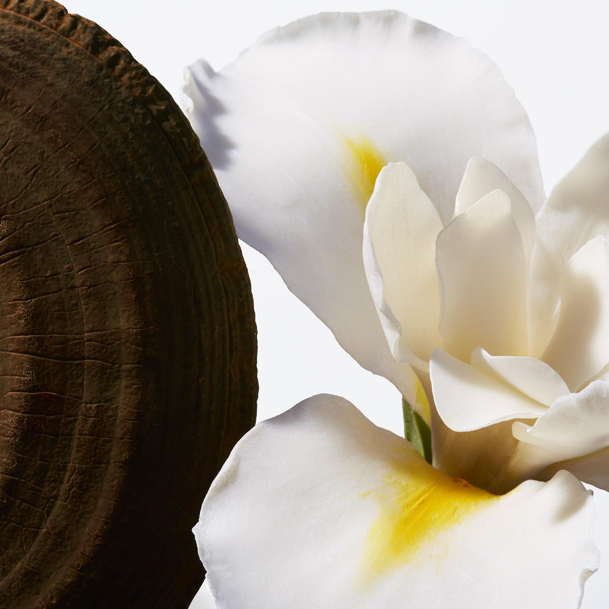 Extractos de hongoReishiy raíz de iris