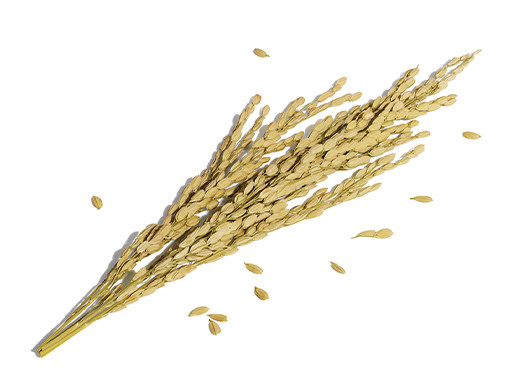 稻米胚芽油