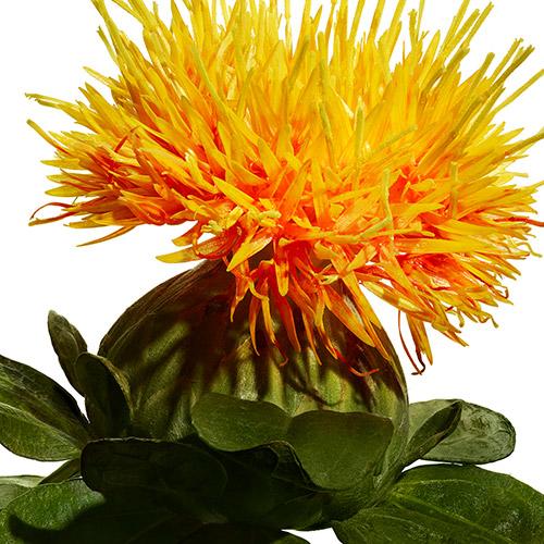 Benibana Flower